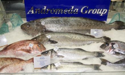 Seafood Expo Global, een terugblik.