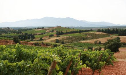 Wijn uit de Rousillon
