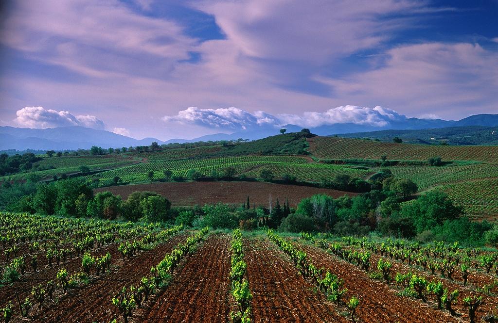 paysage-aspres-jeune-vigne-en-1