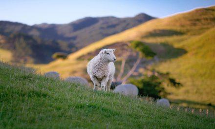 Lamsvlees: een delicatesse