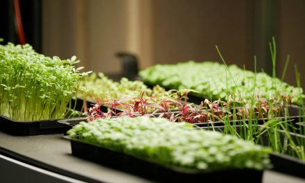 Arom@home à l'Horecatel, l'étagère hydroponique à micro-pousses des restaurants gastronomiques