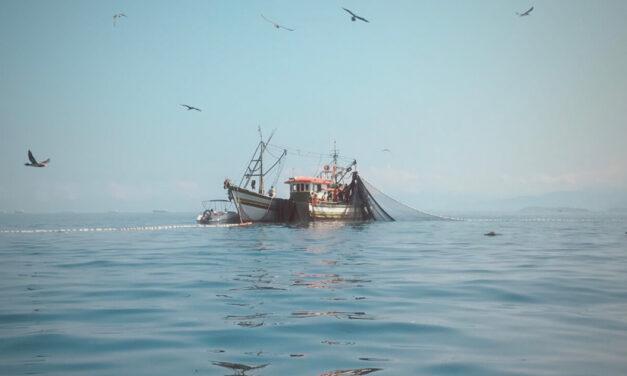 Pêche durable, guide informatif et pêche aux moules en Zélande